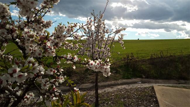 UMIDIGI S2 Lite fotos a paisajes